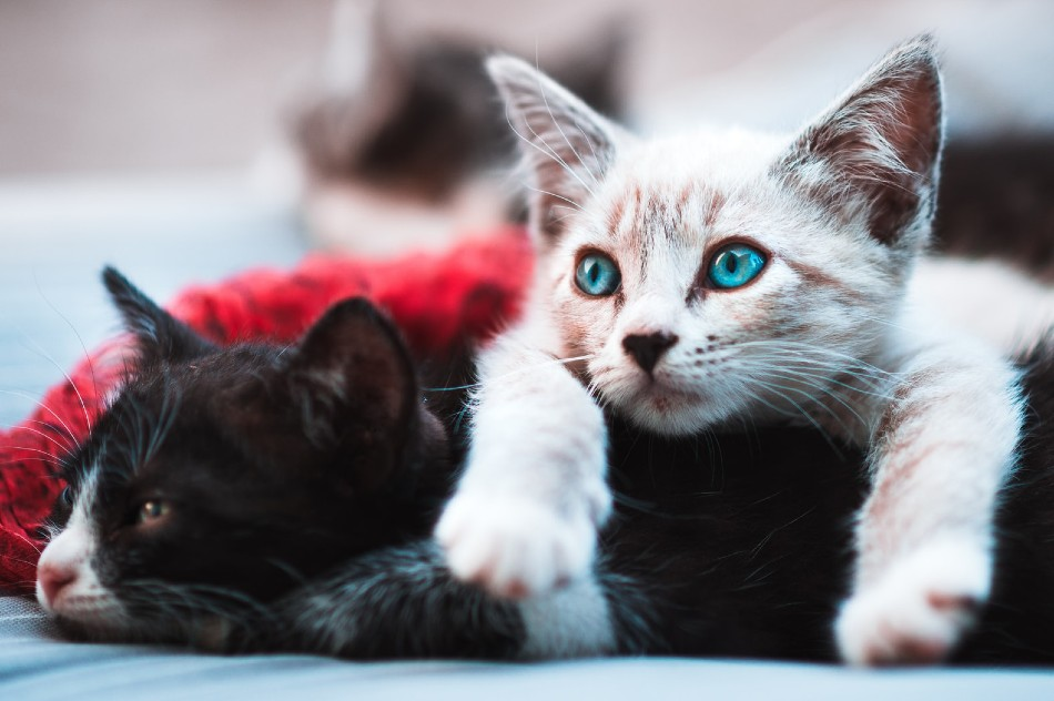 Two kittens close up